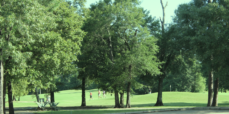 Pretty greens on Longwood Golf Club thumbnail